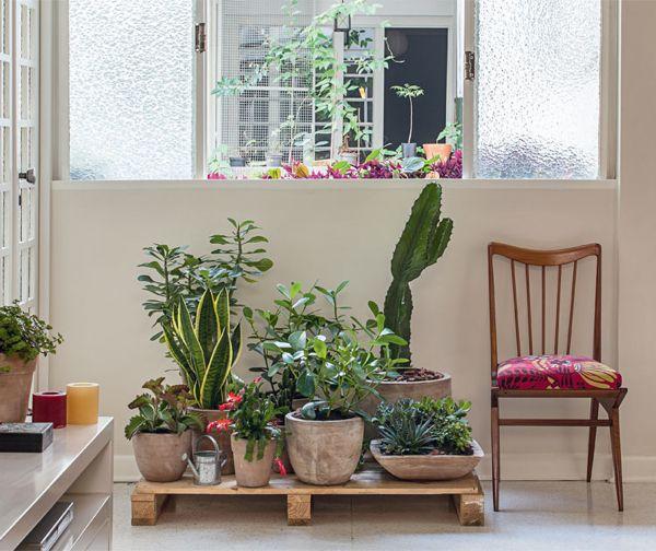 foto-cactus-palet