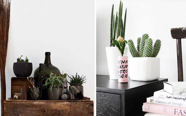 foto-cactus-rincones